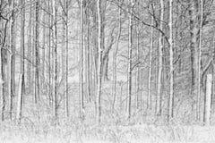 räknade staketsnowtrees fotografering för bildbyråer