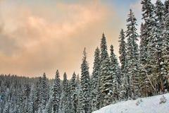 räknade trees för bildsnowsolnedgång Royaltyfri Bild