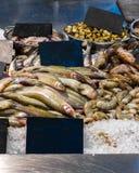 Räknare med fisken Massor av ny fisk och räka i isen royaltyfria foton