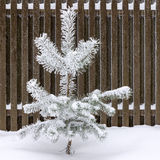 räknat sörja snowtreen arkivbild