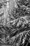 räknat sörja snowtrees royaltyfri bild