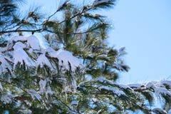 räknat sörja snowtrees Arkivbild