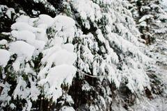 räknat sörja snowtrees Härliga vinterlandskap Frost n Fotografering för Bildbyråer