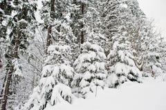 räknat sörja snowtrees Härliga vinterlandskap Frost n Arkivfoton