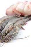 räkor för ny meat för fisk Arkivfoto