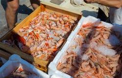 Räkor och scampi som visas på fiskmarknaden Royaltyfria Foton