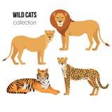 Räuberische Tiere Löwe, Löwin, Gepard, Tiger Wildkatzen vector Satz Lizenzfreies Stockbild