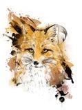 räv Grafisk teckning Illustration för färgdiagram Fotografering för Bildbyråer