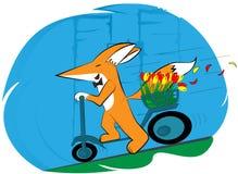 Räven rider snabbt en sparksparkcykel, honom har blommor i hans korg vektor illustrationer