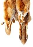 rävpäls Royaltyfri Fotografi