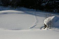 Rävspår i snön Royaltyfri Foto