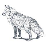 Rävteckning royaltyfri illustrationer
