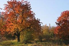 Rävtornauf Jena i hösten Fotografering för Bildbyråer