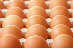 Rå ägg för bönder i magasin Royaltyfria Bilder