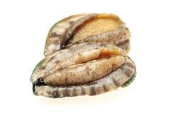 rå abalone fotografering för bildbyråer