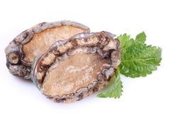 rå abalones Royaltyfri Bild