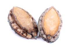 rå abalones Arkivbilder
