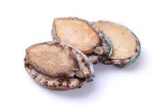 rå abalones Royaltyfria Bilder