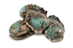 rå abalones Arkivfoto