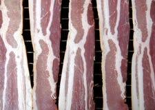 rå bacon Arkivbild