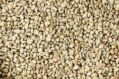Rå bakgrund för kaffebönor Royaltyfri Bild