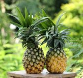Rå banan i maträtt på trätabellen Royaltyfria Foton