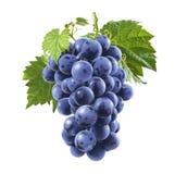Rå blåa druvor samlar ihop isolerat på vit bakgrund arkivbild