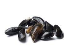 rå blåa isolerade musslor Royaltyfria Foton
