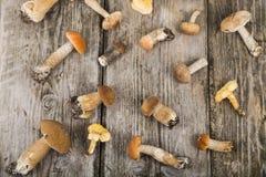 Rå champinjoner på en trätabell Edulis Boletus och kantareller Arkivbilder