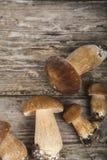 Rå champinjoner på en trätabell Edulis Boletus och kantareller Royaltyfri Bild