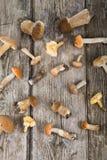 Rå champinjoner på en trätabell Edulis Boletus och kantareller Arkivbild