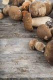 Rå champinjoner på en trätabell Edulis Boletus och kantareller Royaltyfri Fotografi