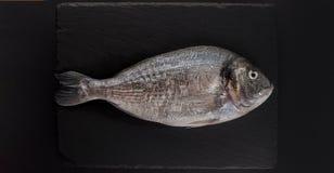 Rå dorado på svart bakgrund Minimalistic modell för havs- restaurang- eller fiskmarknad Bästa sikt, kopieringsutrymme Royaltyfri Bild