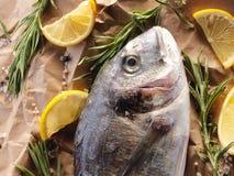 Rå doradofisk med rosmarin och salt hav Arkivfoto