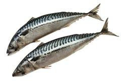 rå fisk Fotografering för Bildbyråer