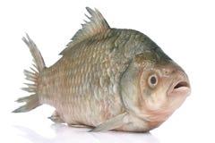 rå fisk Arkivbilder