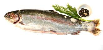 rå fisk Royaltyfri Bild
