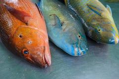 Rå fisk för friskhet i marknaden Fotografering för Bildbyråer
