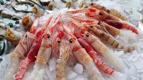 Rå fisk för rå fisk Royaltyfri Bild