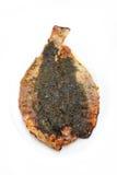 rå fisk för vit bakgrund Royaltyfri Bild