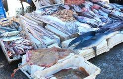 Rå fisk, hajar, stingrocka och räkor på den moroccan marknaden i Essaouira Arkivbild