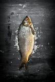 Rå fisk med salt Royaltyfria Foton