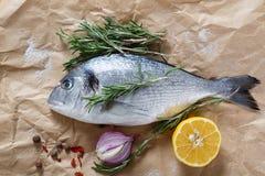 Rå fisk på papper arkivfoton