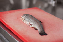 Rå fisk på skärbräda på kommersiellt kök Royaltyfri Bild