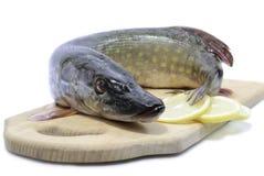 Rå fisk, pik, vit bakgrund Arkivbild