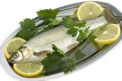 rå fiskcitronparsley Arkivbild