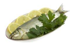 rå fiskcitronparsley Arkivfoto