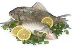 rå fiskcitronparsley Royaltyfri Bild