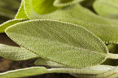 Rå grön organisk vis man Royaltyfria Bilder