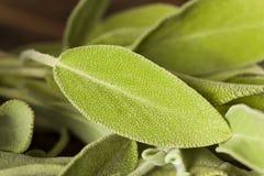 Rå grön organisk vis man Arkivfoto